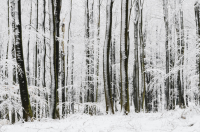 blade i sneen