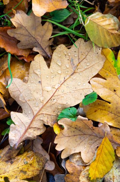 Efterårs skovbund med blade i forskellige farver