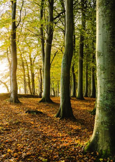 Træer med sol fra venstre