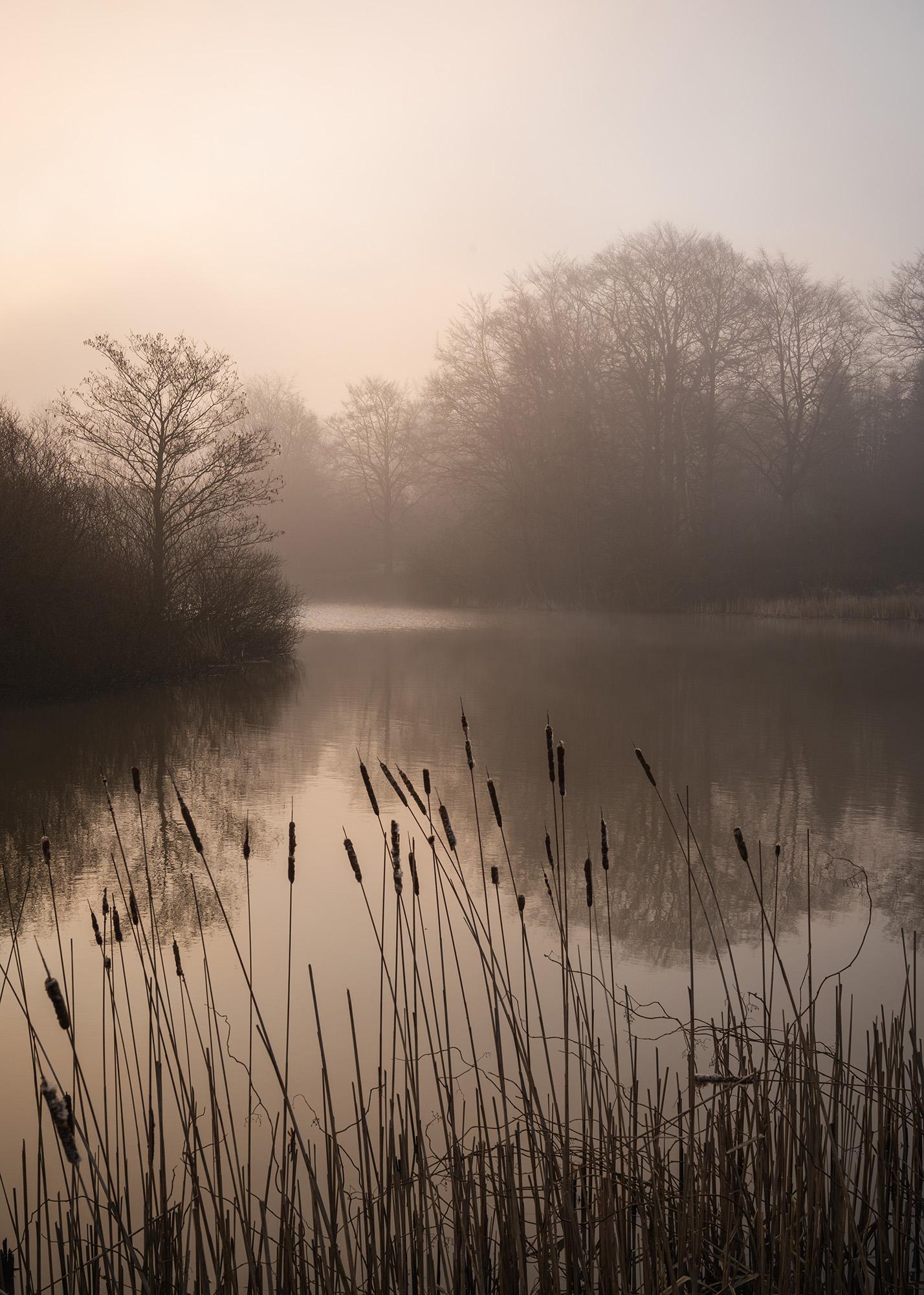 Solen skinner igennem disen ind fra venstre, over en fredfyldt sø, med siv i forgrunden og træer i baggrunden.